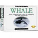 Eyewitness Kit: Whale
